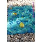 שטיח ים